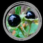 atropinum-sulfuricum